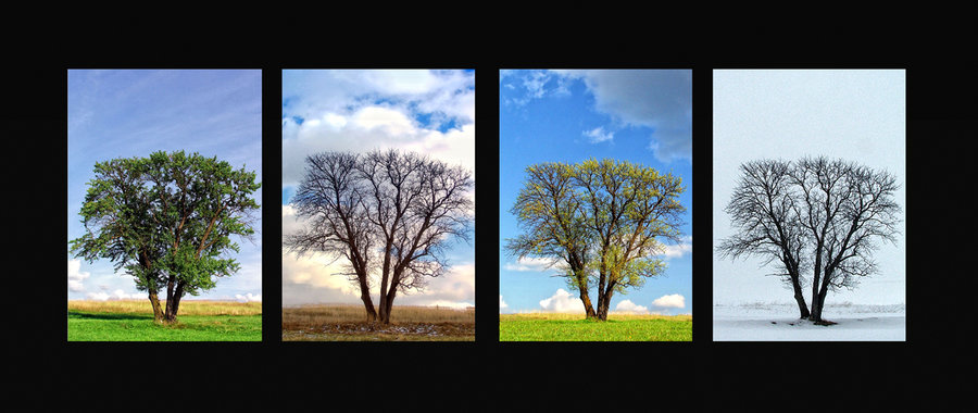 Four_seasons_of_loneliness_by_TodirutVlad